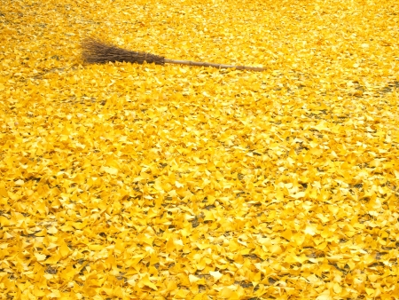 Carpet of Ginko leaves and the bamboo broom photo