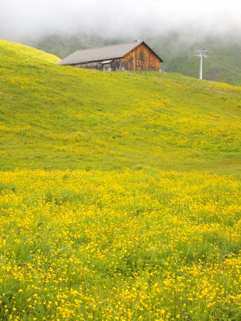 Swiss chalet in the yellow meadow on the alps photo