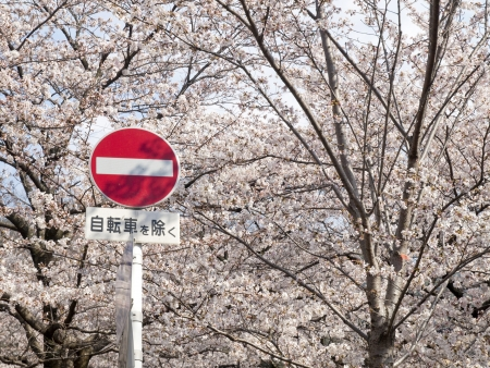 metal post: A Japanese No Entry Sign Post with a red circle and white bar on a metal post against the full bloom of Cherry blossom season  Stock Photo