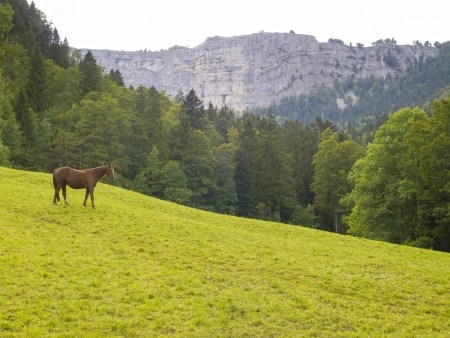 jura: A horse on green pasture in the valley of  Creux du Van in Neuchatel, Switzerland