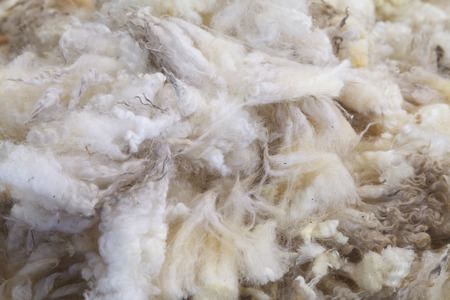 Wool of the Fleece from Sheep in farm.