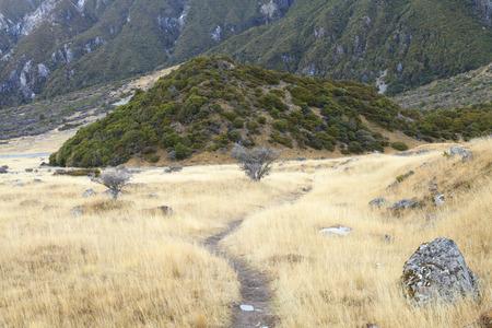 aoraki mount cook national park: Trail through tussock in Hooker Valley leading to Aoraki, Mount Cook, highest peak of Southern Alps in Aoraki Mount Cook National Park, Canterbury region, South Island, New Zealand.
