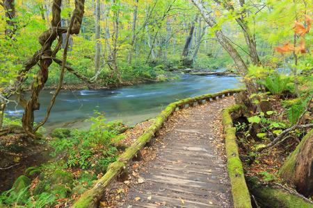 Hiking trails at Oirase Stream Oirase Keiryu, Aomori Prefecture, Tohoku region, Japan. Oirase Stream is the most famous and popular autumn colors destinations in Japan. Archivio Fotografico