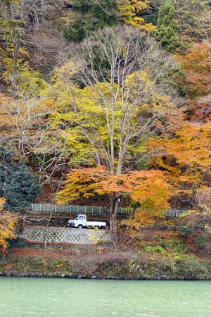 acer palmatum: Colorful autumn foliage forest at Katsura riverside near Togetsukyo bridge, Arashiyama area, Kyoto, Japan. Stock Photo