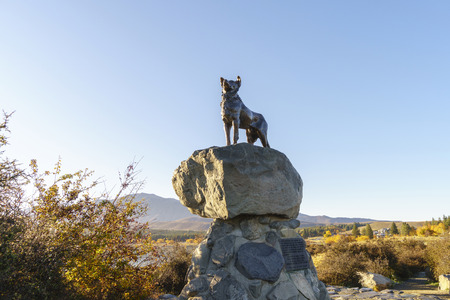 livelihoods: LAKE TEKAPO, NEW ZEALAND -MAY 6, 2016: Collie sheepdog bronze statue. It was commissioned by Mackenzie Country residents in recognition of the indispensable role of the sheepdog in their livelihoods.