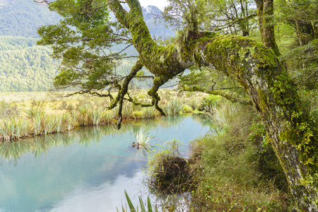 anau: Landscape of the Mirror Lake, a small lake on the Te Anau-Milford Sound Highway, Fjordland National Park, South Island, New Zealand. Stock Photo