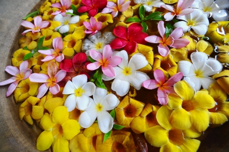 flowers in water for house decoration Stock Photo - 13705648