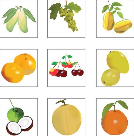 persimmon: mix fruit Illustration