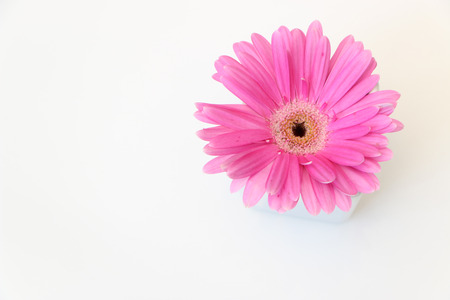 cute pink flower photo