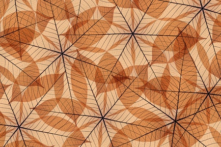 Skeleton leaf abstract, color Brown, background texture photo