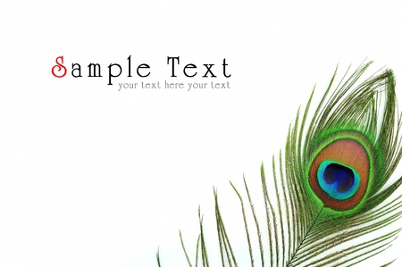 Detail of peacock feather eye on white background Stock Photo - 9879036