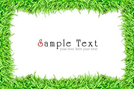 Gras-Frame in white background Standard-Bild - 9879075