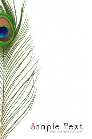 pluma blanca: Detalle del ojo de plumas de pavo real sobre fondo blanco