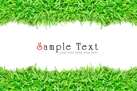 lawn tennis: Grass frame in white background Stock Photo