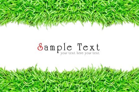 Grass frame in white background Standard-Bild - 10021125