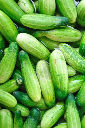 pappy: Pile of fresh organic cucumbers