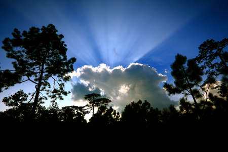 Sunlight through the cloud in highland forest. Thailand. Stock Photo - 8733249