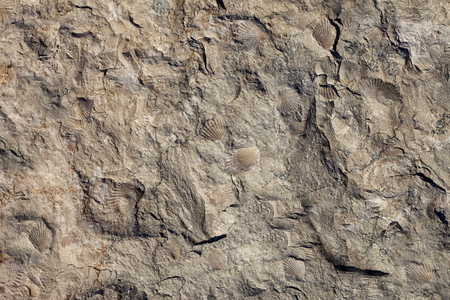 Priorità bassa di struttura di pietra. Superficie del marmo con un motivo di conchiglie. Archivio Fotografico