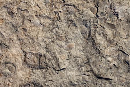 Steinbeschaffenheitshintergrund. Oberfläche des Marmors mit Muschelmuster. Standard-Bild