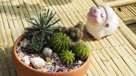 the cactus and sheep on the table background photo