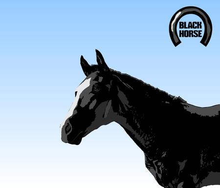 nostrils: black stallion Illustration