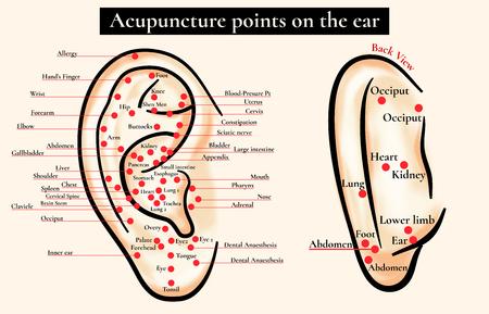Zones réflexes sur l'oreille. Les points d'acupuncture sur l'oreille. La carte de points d'acupuncture (zones réflexes) sur l'oreille. Banque d'images - 56909644