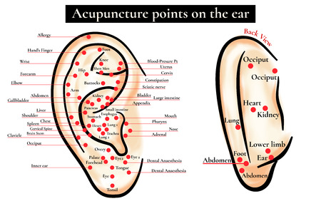Zone riflesse sull'orecchio. Punti di agopuntura sull'orecchio. Mappa dei punti di agopuntura (zone riflesse) sull'orecchio. Archivio Fotografico - 56909646