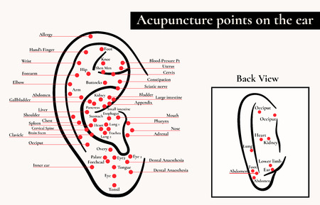 reflex: Reflex zones on the ear. Acupuncture points on the ear. Map of acupuncture points (reflex zones) on the ear.