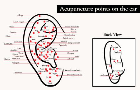 zone riflesse sull'orecchio. Punti di agopuntura sull'orecchio. Mappa dei punti di agopuntura (zone riflesse) sull'orecchio.