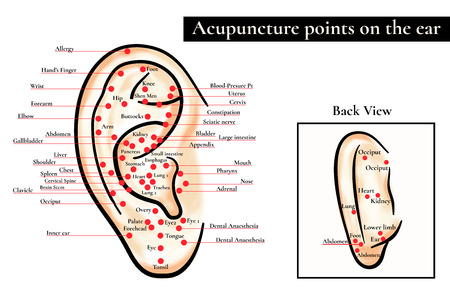 ear acupuncture: Reflex zones on the ear. Acupuncture points on the ear. Map of acupuncture points (reflex zones) on the ear.