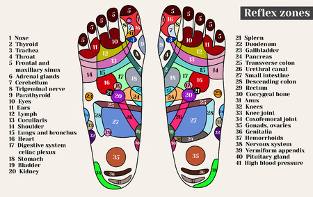Acupuncture points on the feet. The reflex zones on the feet. Acupuncture. Chinese medicine. Banco de Imagens - 56909667