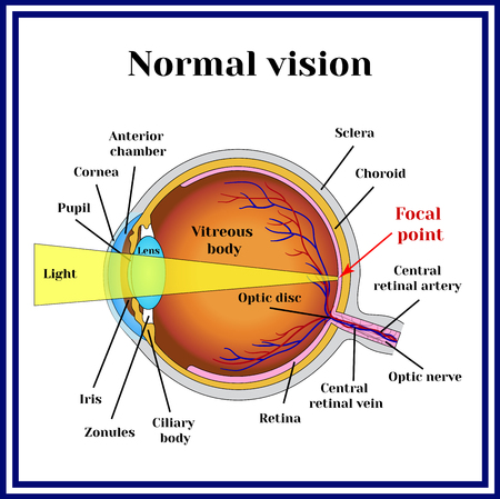 Normal vision. Eyeball structure.