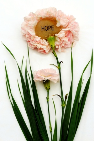 An engraved hope stone sits inside the petals of a pink carnation. photo