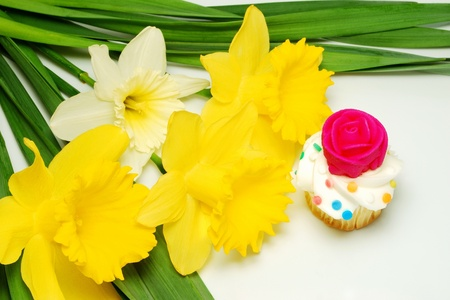 Cupcake is decorated with a fuchsia coloured sugar rose  Daffodils and daffodil leaves frame the photo, but leave a little room for text  Stock Photo - 13209555