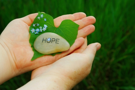 finding a cure: Forget-me-not flowers are symbolic for finding a cure for memory loss  This image is to convey hope in finding a cure  It also includes a heart-shaped leaf from a Morning Glory plant