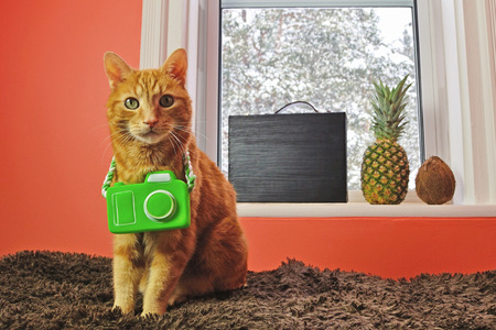 winter escape: A fun concept image for pet travelers: Indoor cat wants to escape the winter blizzard and go on a tropical vacation with his owner.