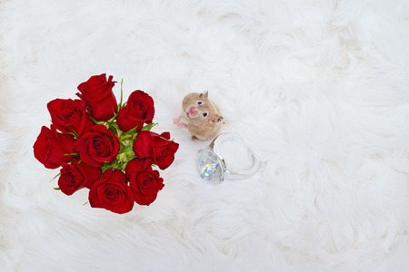 Romantic concept image. Hamster asks, Will you marry me? Stock Photo