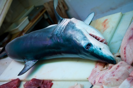 A young blue shark killed off the straight of Gibraltar and now on display in a fish market in southern Spain