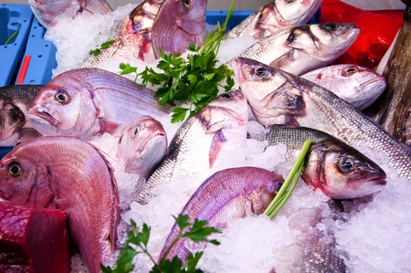A selection of fish from around the straits of Gibraltar  Mediterranean