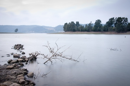 A cold Andalucian morning at a lake with a dead plant in the water.