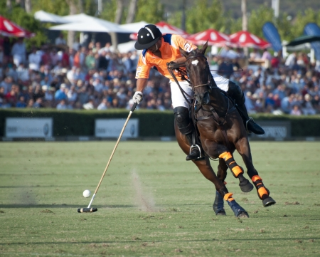 A polo player on horseback caught in the action  Stock Photo