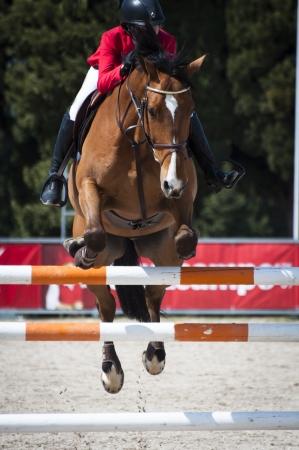 springpaard: Een show jumping paard en ruiter springen een hek Stockfoto