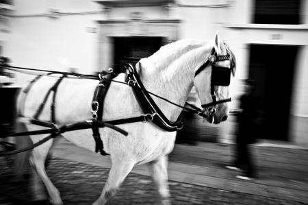 blinkers: Horses Cart in motion through the streets of Ronda Spain (Black & White) Stock Photo