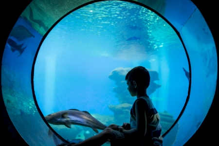 A young boy watching the fish from a window at an Aquarium Stock Photo