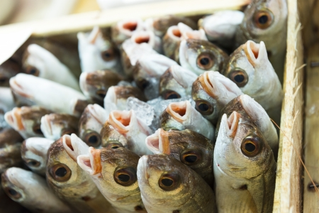common market: The daily catch of common sea bream on display at a Spanish fish market. Stock Photo