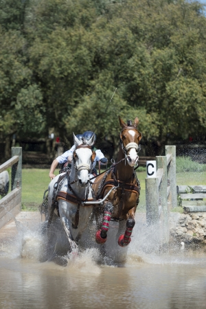 An image of from a Horse Driving competition where the riders navigate an obsticle course