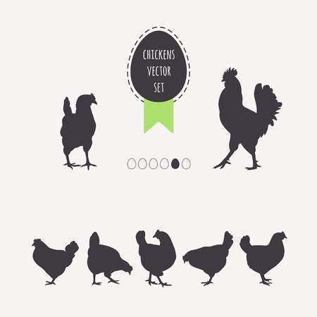 gallina con huevos: Conjunto de pollos. Siluetas de las gallinas ponedoras, gallo. huevo marco con cinta verde.