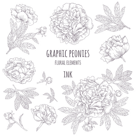 Hand-drawing ink peonies. Vector graphic flowers on white background. Collection contour buds, leaves peonies.