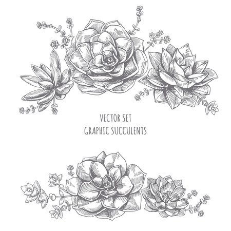 Floristic composition of succulents. Succulent drawing on white background.