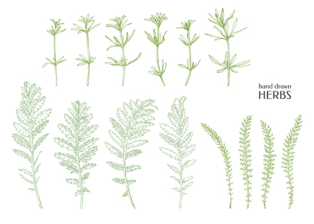 Hand drawn herbs weed. Ink graphic.